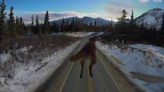 GoPro Alaska:  Road Trip To Denali National Park, Drones, Dogs And More