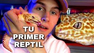 👈 Quieres Un Reptil Como Mascota? (VEA ESTO) | Mejores Reptiles Para Principiantes 🐍 | Tomas Pasie