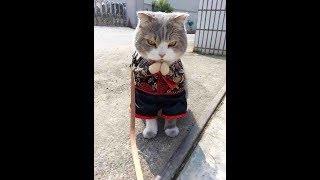 ПРИКОЛЫ С КОТАМИ, Смешные коты и кошки 2018,  КОТЫ ПРИКОЛЫ 2018