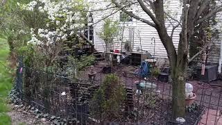 Small Space Townhouse Garden Tour- A Walk Through My Secret Garden!