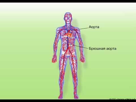 Народный доктор и гипертония