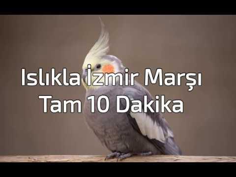 Islıkla İzmir Marşı / Sultan Papağanı İzmir Marşı Eğitimi / Tam 10 Dk.