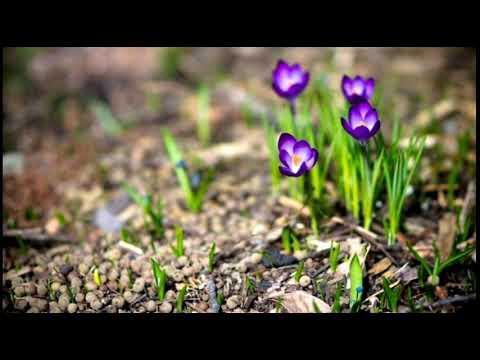 Shopen ~ Vals of the flowers | Шопен ~ вальс цветов