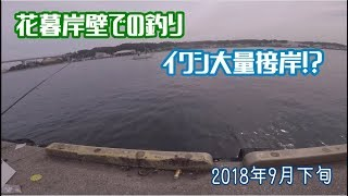 花暮岸壁での釣りイワシ大量接岸!?2018年9月下旬