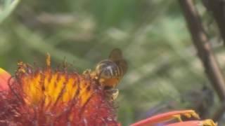 Пчеловодные весы с GSM Bees Scales