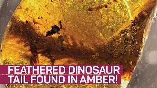 Feathered Dinosaur - Scientific Research