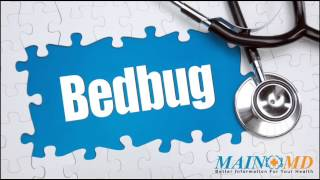 Bedbug ¦ Treatment and Symptoms