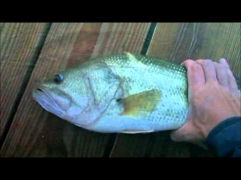 6/27/2011  Delaware summer bass fishing
