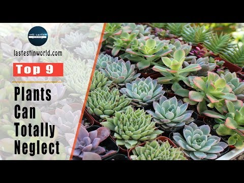 9 Houseplants You Can Totally Neglect - Easy Plants to Grow