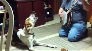 animale cainele cantaret