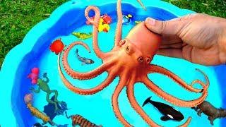 выучить диких животных и названия морских существ для детей | учить цвета для детей