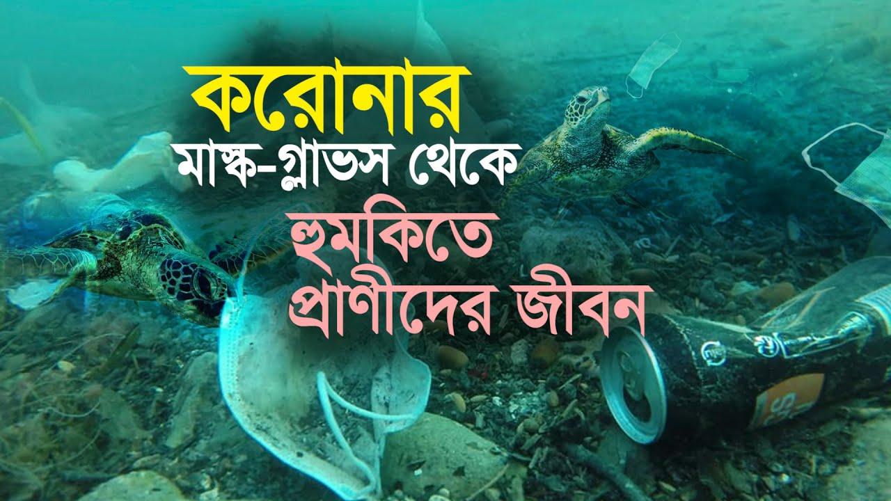 মাস্ক-গ্লাভস থেকে হুমকির মুখে সামুদ্রিক প্রাণীদের জীবন- The lives of marine animals are under threat