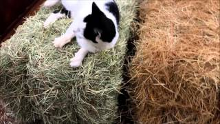 How To Identify Good Hay