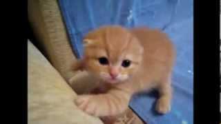 Самые Смешные Котята  2014