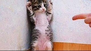 Những Chú Mèo Hài Hước Nhất Thế Giới - Phần 1
