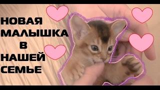 Новый маленький котенок Ариела в семье   тигренок - блогер   розовая комната для малышки