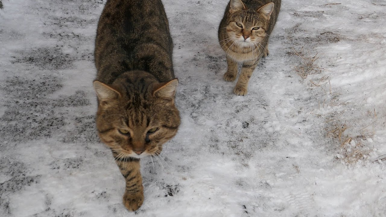 Two striped cats and a stray dog