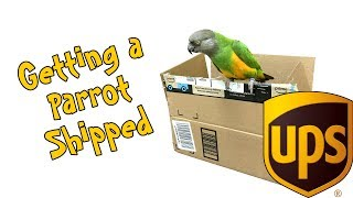 Can You Get a Parrot Shipped to You???