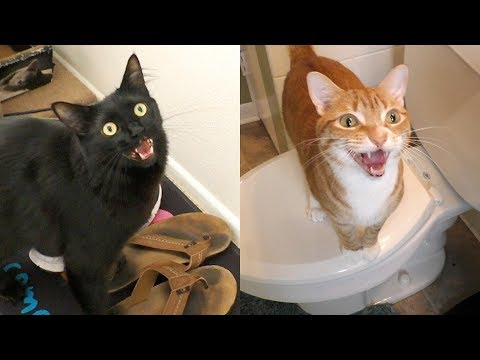 What Is Your Cat Trying to Tell You? 7 Cat Sounds Explained