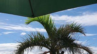 まだまだ元気にセミが鳴いている沖縄・やんばる。沖縄の天気をLIVE配信