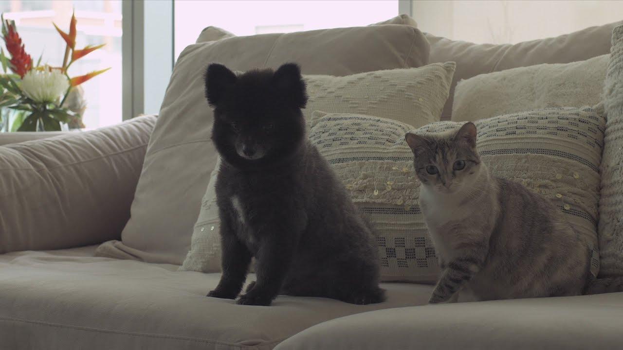 Pet Parents Cant Live Without Petcube