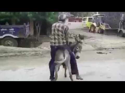 Whatsapp video Man gets sexually assaulted by a donkey funny video