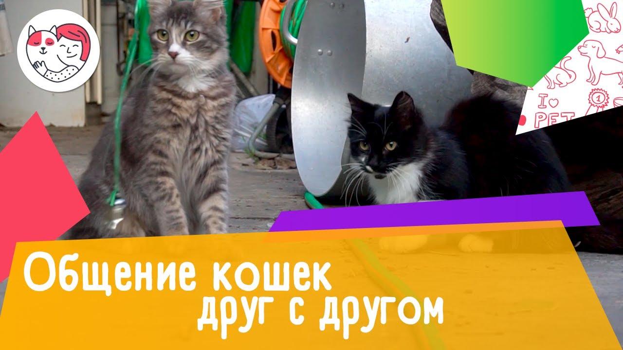 5 интересных фактов об общении кошек друг с другом