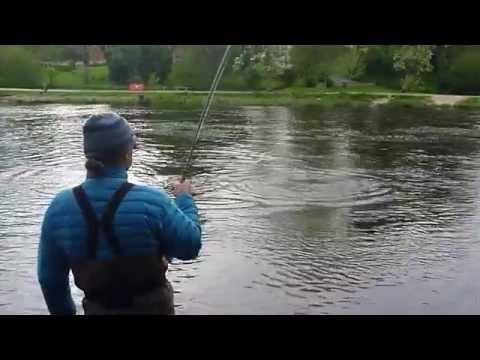 Mörrum Sweden - Fishing for fresh Salmon