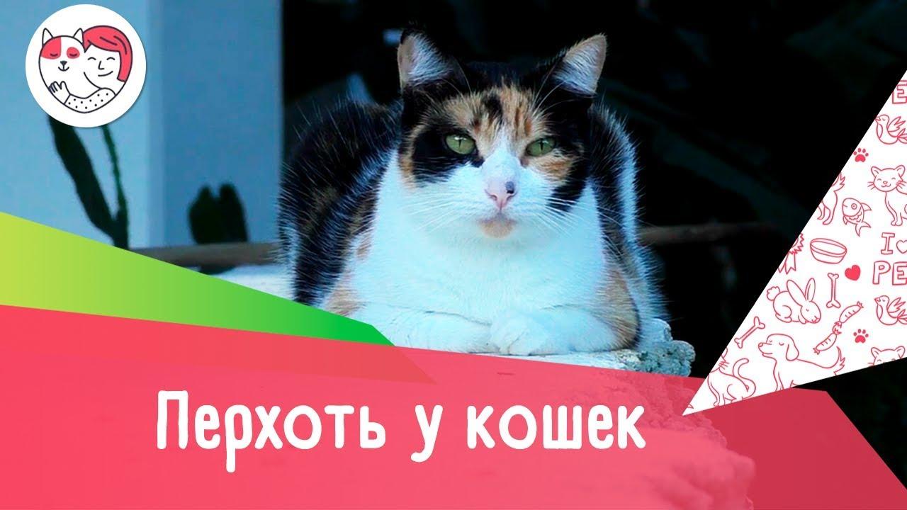 5 причин перхоти у кошек