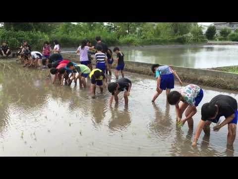 蒲池小学校の田植え 2016