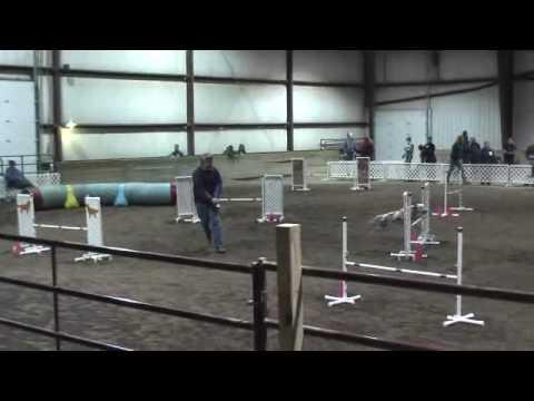 Dalmatian Agility Porter Des Moines 3-21-10