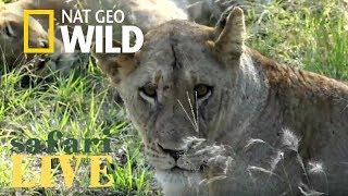 Safari Live - Day 127 | Nat Geo Wild