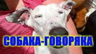 Собака-говоряка и трындяка Собака с человеческими зубами