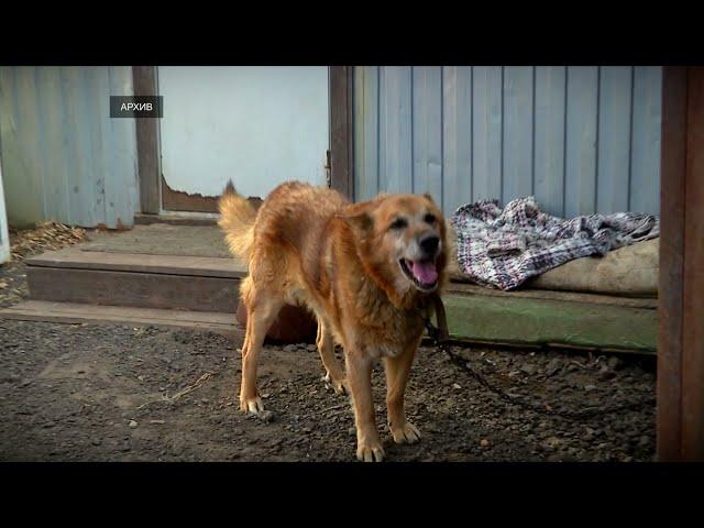 В Тверской области планируют внедрить современную систему обращения с безнадзорными животными