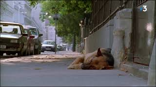 Serie Rex : Rex needs his drops to breathe