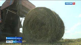 В Хабаровском крае практически завершили заготовку сена для крупного рогатого скота
