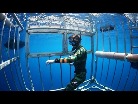 Swimming with Sharks Outside the Shark Cage! - Hawaii (Open Ocean) | DALLMYD