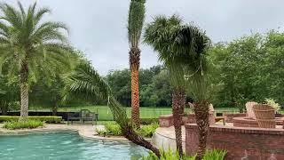 Beautiful Poolside Tree Job