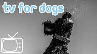 VideosforDogs!DeepChilloutAbstractMovies&TVforDogstoWatch!