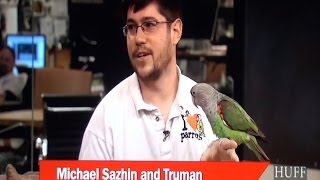 Truman Cape Parrot - Parrot Wizard Interview on Huffington Post Live