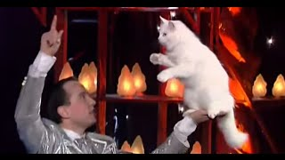 Patrick Sebastien Show Cats Training