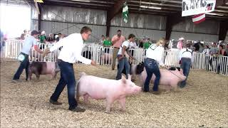 4-H Swine Showmanship