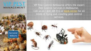 Professional Services for Easy Pest Removal
