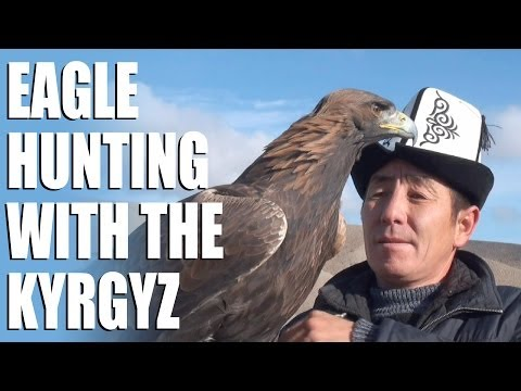 Dramatic hare hunting with a golden eagle