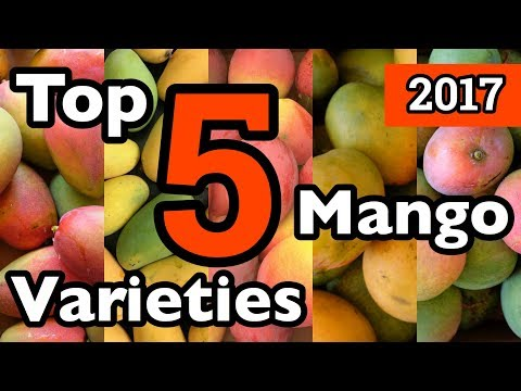 Mangoes - Wholesale Price for Mangoes in India