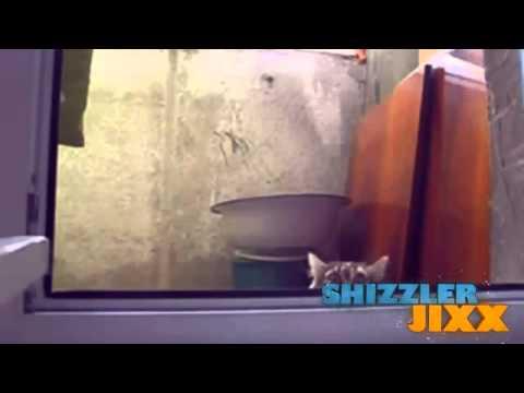 Mèo siêu hài
