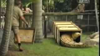 Croc Hunter : The White Crocodile (Part 4)