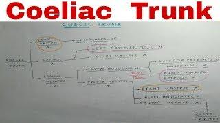 Coeliac Trunk - 3a