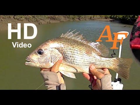 Mangrove Jack n Golden Snapper Fly Rod