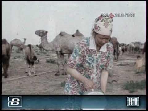 """Казахстан. Специализированный верблюдоводческий совхоз """"Жана-Жол"""" 15.08.1984"""